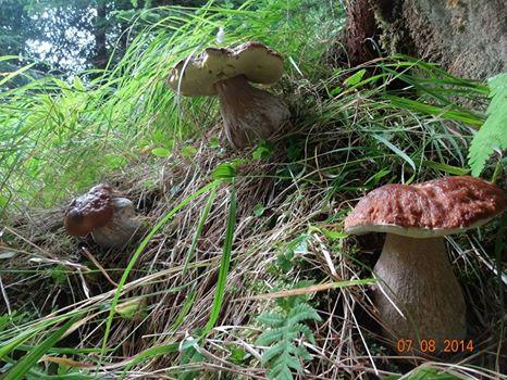 Funghi n. 1