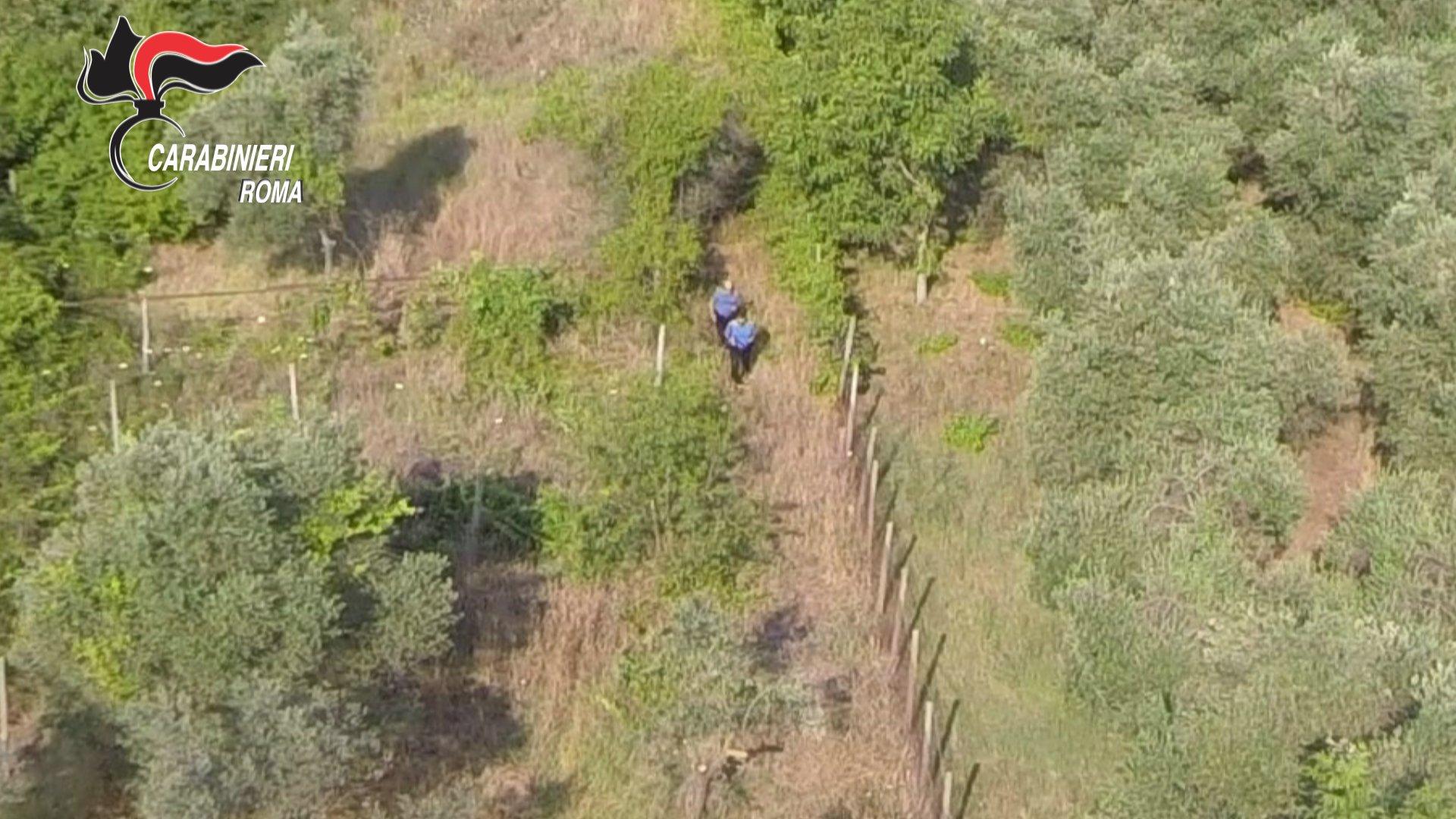 La piantagione di marijuana individuata dai Carabinieri vista dall'alto_