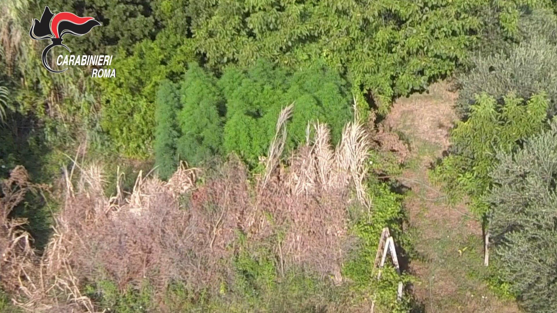 La piantagione di marijuana individuata dai Carabinieri vista dall'alto__