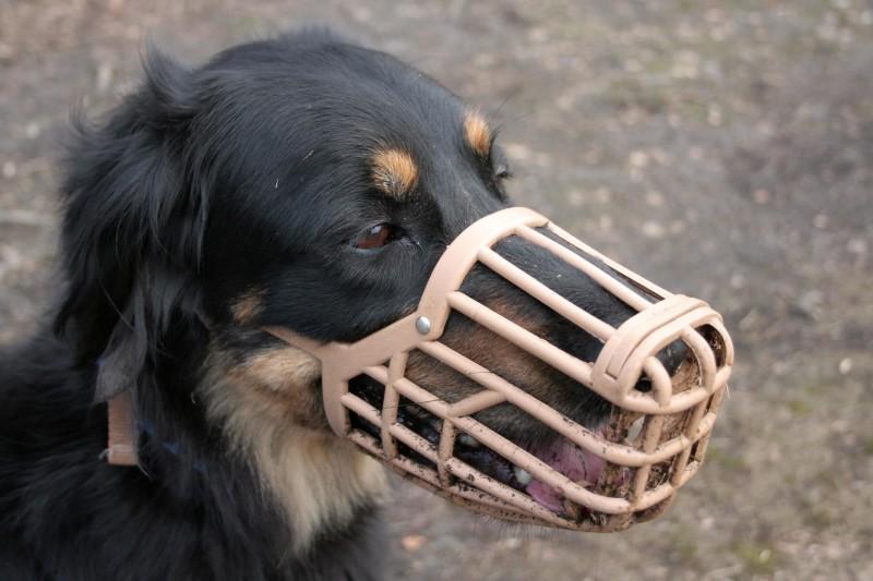 come-mettere-la-museruola-a-un-cane