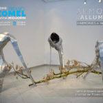 Latina: Premio COMEL Vanna Migliorin Arte Contemporanea VII edizione