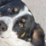Gli Amici del Cane di Latina sul contratto di gestione del Canile Comunale