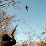 Assessore Pecorari di Artena, rispettare le norme della caccia